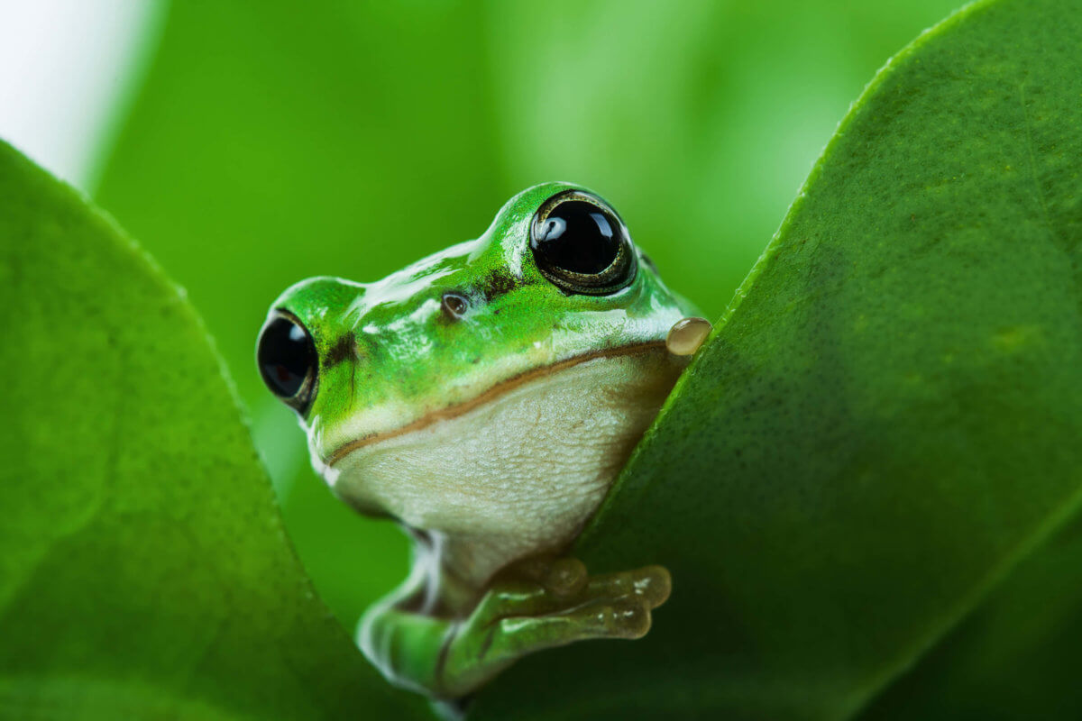 blog_frog
