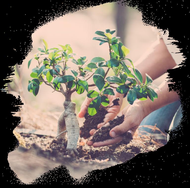WordPress Programmierer: Aufgaben und Leistungen im Überblick 1